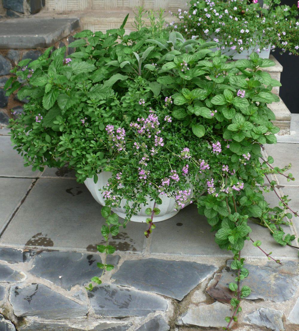 Купить рассаду в Санкт-Петербурге для сада и огорода 64